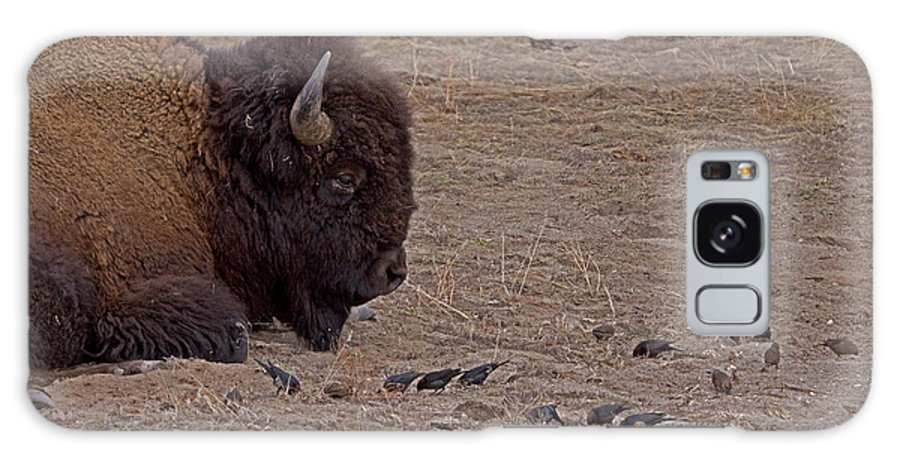 Bos Bison Galaxy S8 Case featuring the photograph Buffalo And Birds  #2236 by J L Woody Wooden