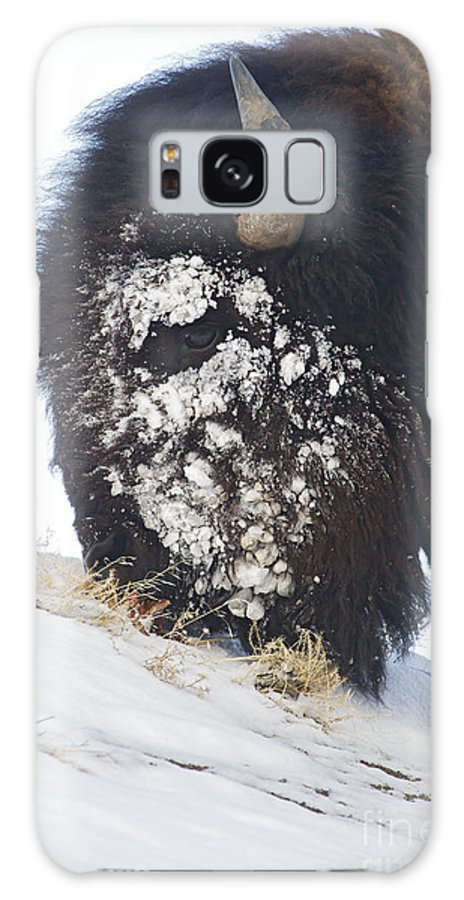Buffalo Galaxy S8 Case featuring the photograph Buffalo Eating  #9634 by J L Woody Wooden