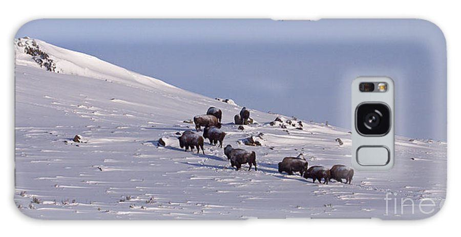 Buffalo Galaxy S8 Case featuring the photograph Buffalo Herd In Snow  #6075 by J L Woody Wooden