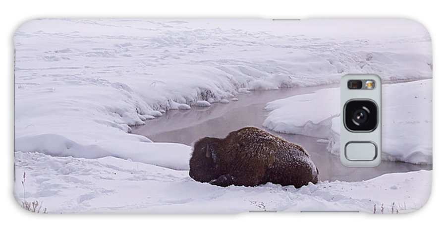 Buffalo Galaxy S8 Case featuring the photograph Buffalo In Snow  #6143 by J L Woody Wooden