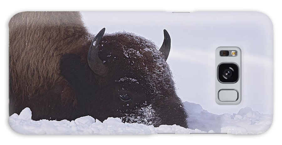 Buffalo Galaxy S8 Case featuring the photograph Buffalo In Snow  #6920 by J L Woody Wooden
