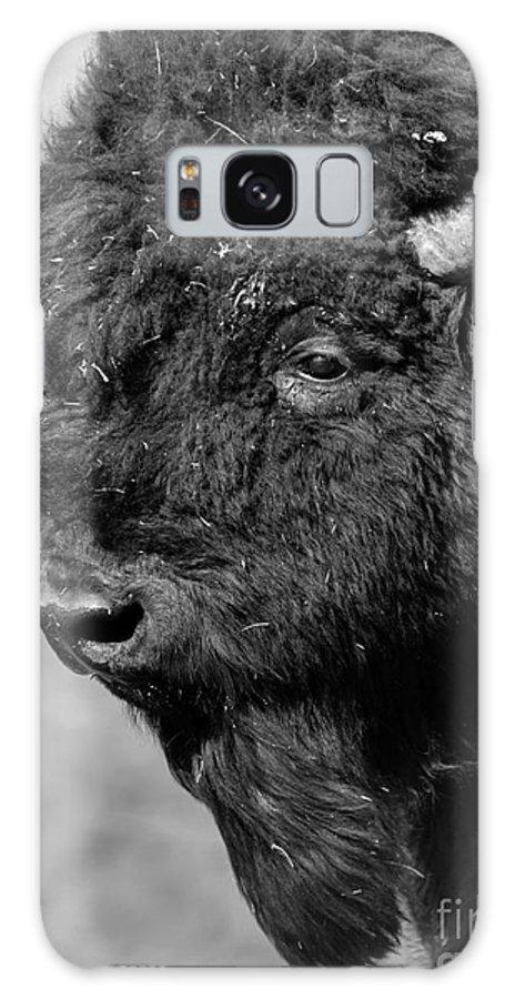 Buffalo Galaxy S8 Case featuring the photograph Buffalo by Kimberly Mitchell