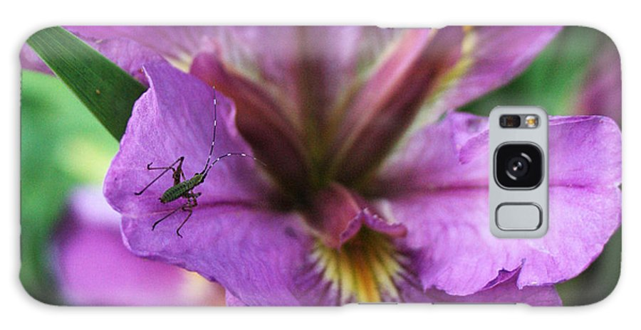 Bug Galaxy S8 Case featuring the photograph Buggy Iris by Valerie Loop