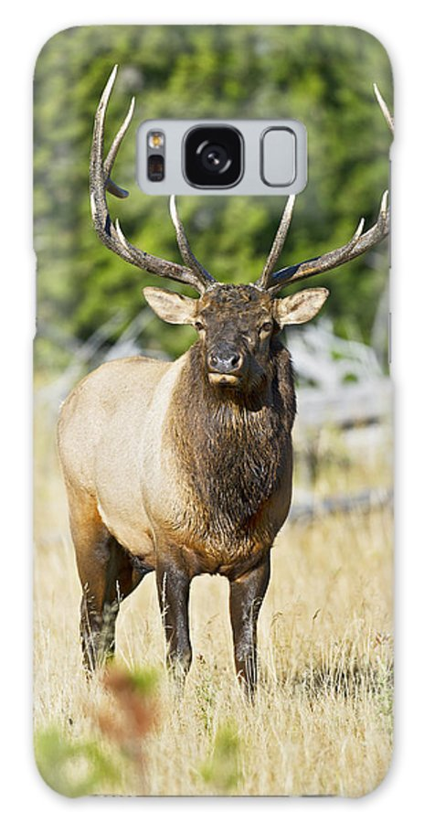 Bull Galaxy S8 Case featuring the photograph Bull Elk IIII by Gary Langley