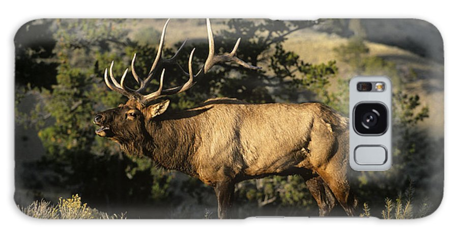 North America Galaxy S8 Case featuring the photograph Bull Elk In Rut Bugling Yellowstone National Park by Dave Welling