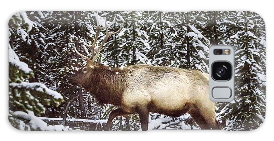 Bull Elk Galaxy S8 Case featuring the photograph Bull Elk In The Woods by Carolyn Fox