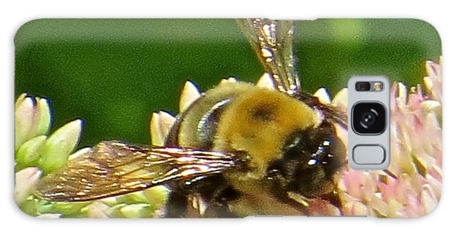 Bumble Bee Galaxy S8 Case featuring the photograph Bumble Bee 104 by Patsy Pratt