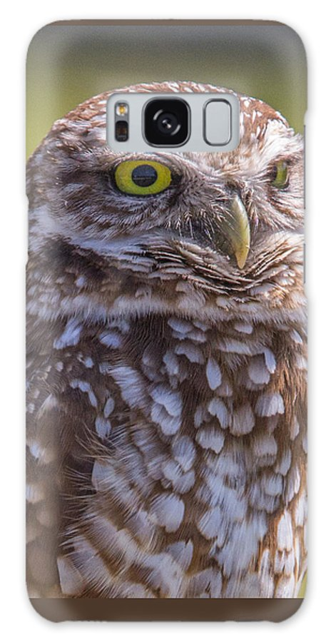 Burrowing Galaxy S8 Case featuring the photograph Burrowing Owl 001 by Stuart Rosenthal