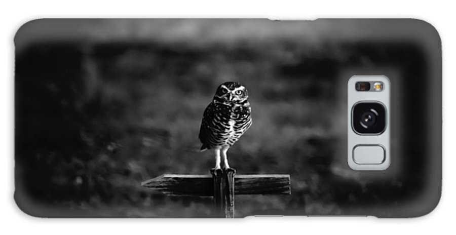 burrowing Owl Galaxy S8 Case featuring the photograph Burrowing Owl At Dusk by Kelly Gibson