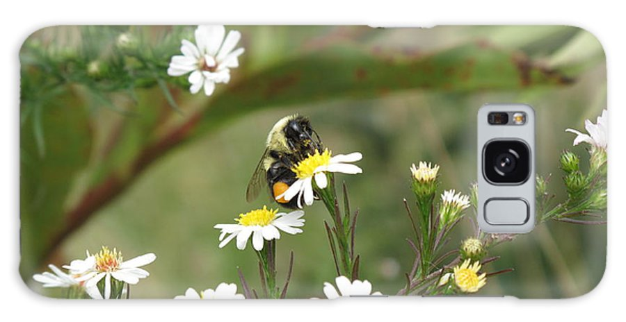 Bee Galaxy S8 Case featuring the photograph Busy Bee by Barbara McDevitt