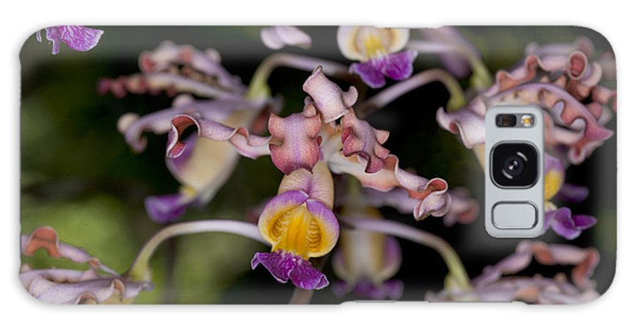 Flowers Galaxy S8 Case featuring the photograph Busy Orchids by Thomas Levine