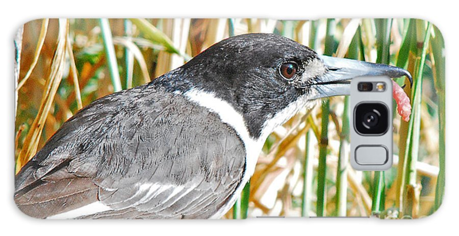 Australian Galaxy S8 Case featuring the photograph Butcherbird by Christopher Edmunds