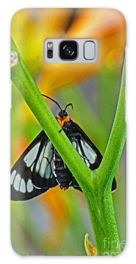 Butterflies Galaxy S8 Case featuring the photograph Butterfly An3597-13 by Randy Harris