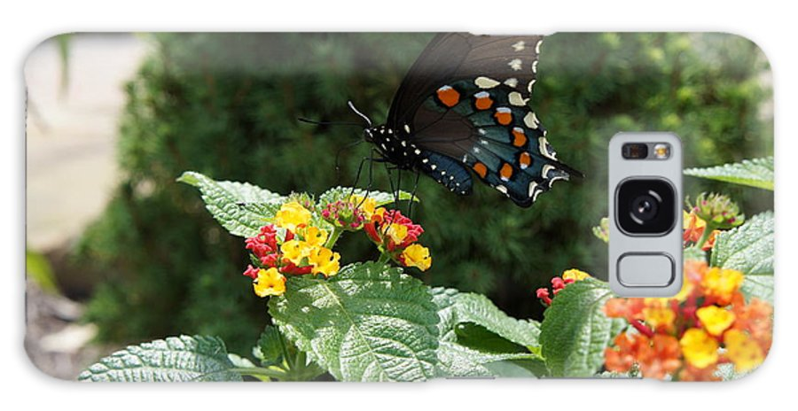 Butterfly Galaxy S8 Case featuring the photograph Butterfly by Cami Sante
