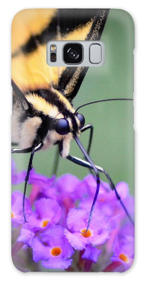 Butterfly Galaxy S8 Case featuring the photograph Butterfly by Dave Wangsness