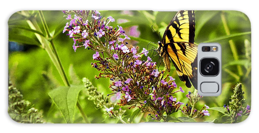 Butterfly Galaxy S8 Case featuring the photograph Butterfly Garden by Sennie Pierson