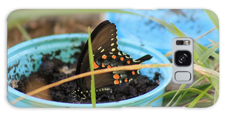 Butterfly Galaxy S8 Case featuring the photograph Butterfly In A Cup by Robin Vargo