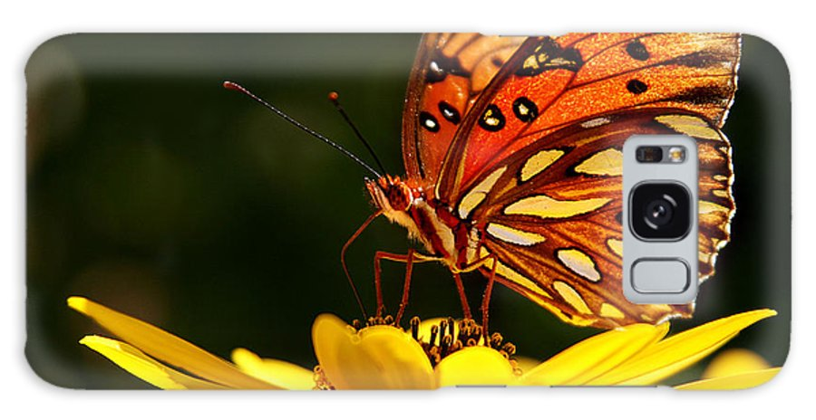 Butterfly Galaxy S8 Case featuring the photograph Butterfly On Flower by Joan McCool