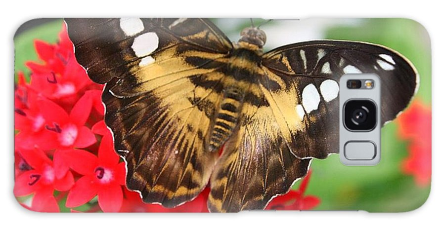 Butterfly On Red Flower - Butterflies - Insects - Nature- Flowers Galaxy S8 Case featuring the photograph Butterfly On Red Flower by Dora Sofia Caputo Photographic Design and Fine Art