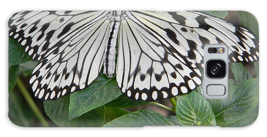 Butterfly House Galaxy S8 Case featuring the photograph Asian Paper Kite by Roe Rader