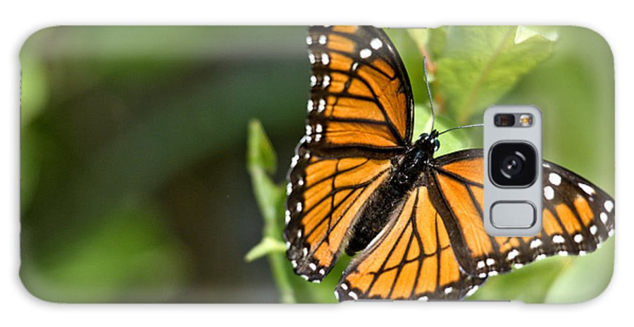 Monarch Galaxy S8 Case featuring the photograph Butterfly Scene by Cheryl Baxter