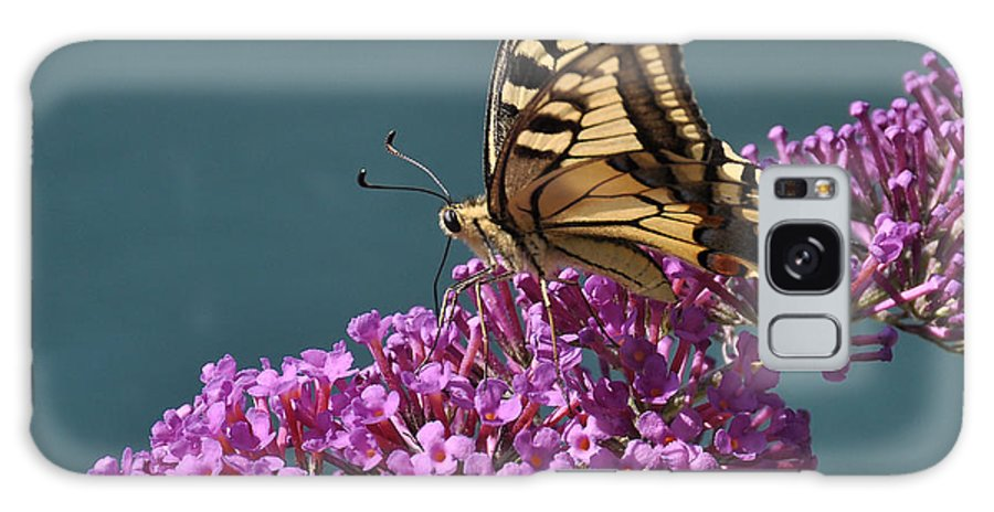 Butterfly Galaxy S8 Case featuring the photograph Butterfly by Simona Ghidini