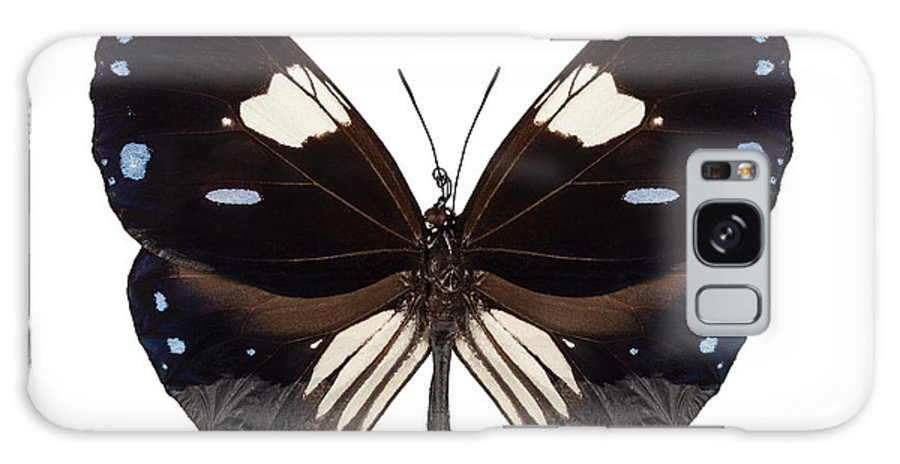 Malaysia Galaxy S8 Case featuring the photograph Butterfly Species Euploea Radamanthus Common Name Magpie Crow by Pablo Romero