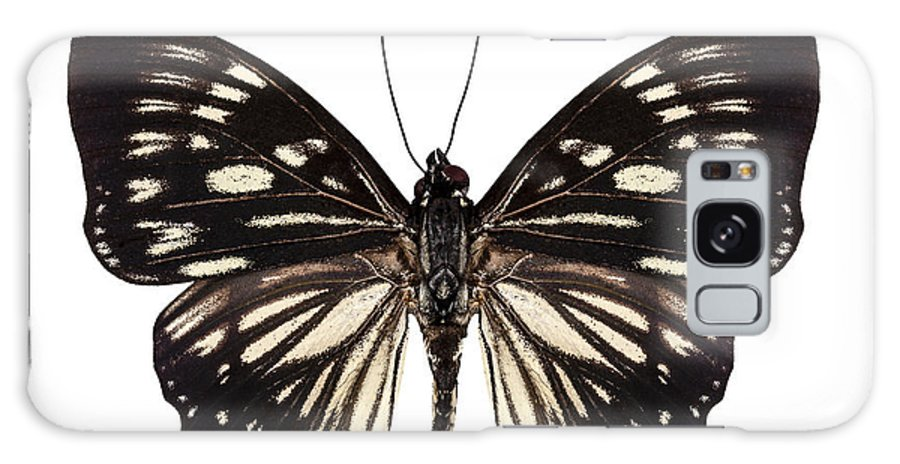 Malaysia Galaxy S8 Case featuring the photograph Butterfly Species Euripus Nyctelius Euploeoides by Pablo Romero