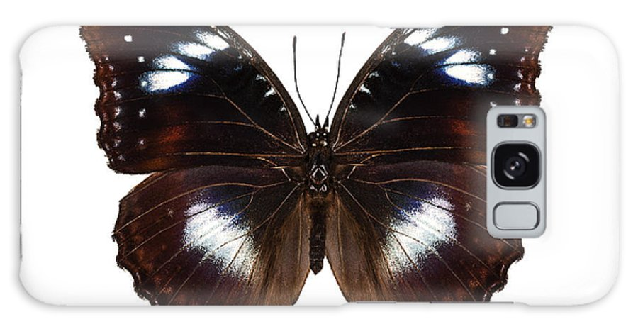 Antenna Galaxy S8 Case featuring the photograph Butterfly Species Hypolimnas Bolina by Pablo Romero