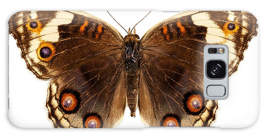 Indonesia Galaxy S8 Case featuring the photograph Butterfly Species Junonia Orithya by Pablo Romero