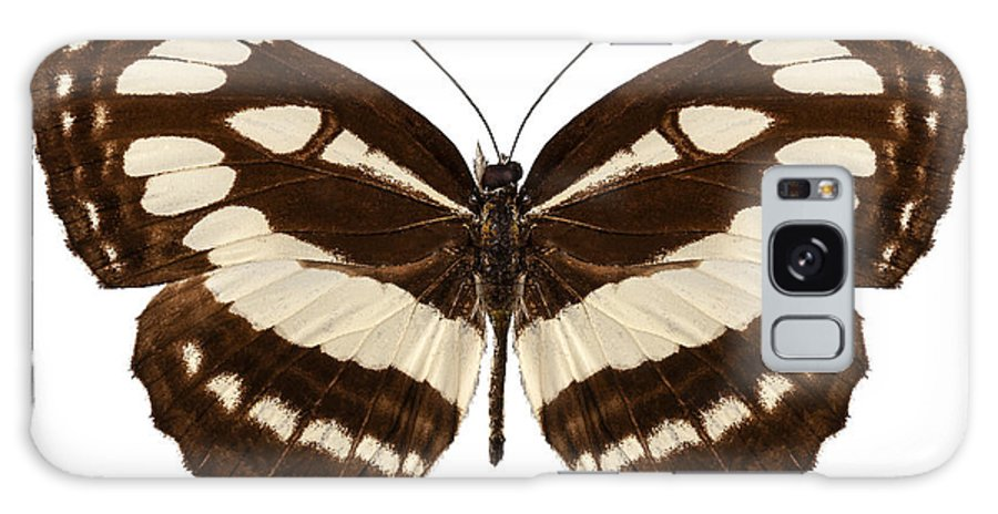 Antenna Galaxy S8 Case featuring the photograph Butterfly Species Neptis Hylas by Pablo Romero