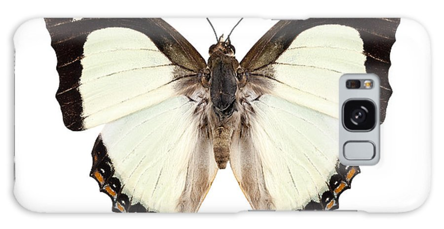 Indonesia Galaxy S8 Case featuring the photograph Butterfly Species Polyura Jalysus by Pablo Romero