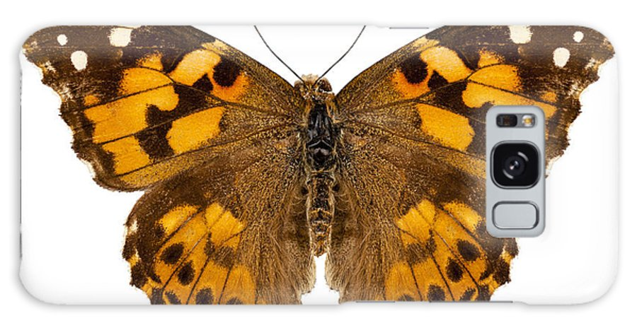 Indonesia Galaxy S8 Case featuring the photograph Butterfly Species Vanessa Cardui by Pablo Romero