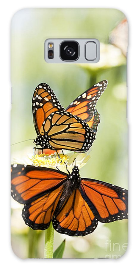 Butterflies Galaxy S8 Case featuring the photograph Butterfly Trio by Patty Colabuono