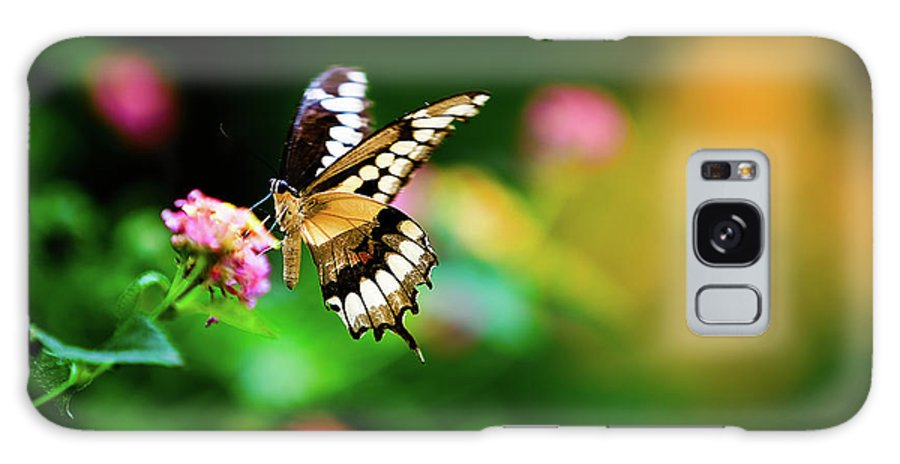Butterfly Galaxy S8 Case featuring the photograph Butterfly Two by Steven Llorca