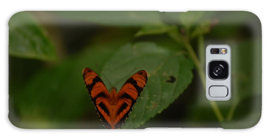 Heart-shaped Butterfly Galaxy S8 Case featuring the photograph Butterfly With A Heart by Cheryl Kostanesky