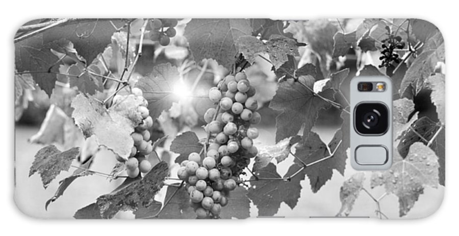 Horizontal Galaxy S8 Case featuring the photograph Bw Lens Flare Hanging Thompson Grapes Sultana by Sally Rockefeller