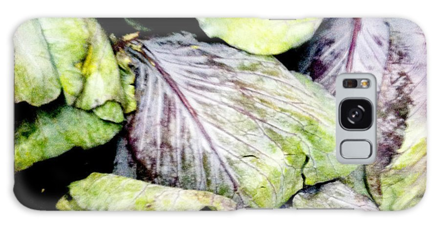 Purple Galaxy S8 Case featuring the photograph Cabbage by Sherry Ross
