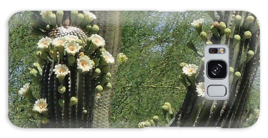 Chelsylotze Galaxy S8 Case featuring the photograph Cactus Flower by ChelsyLotze International Studio