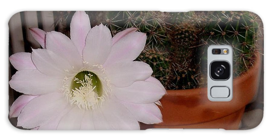 Cactus Plant Galaxy S8 Case featuring the photograph Cactus Flower In Bloom by Gail Matthews