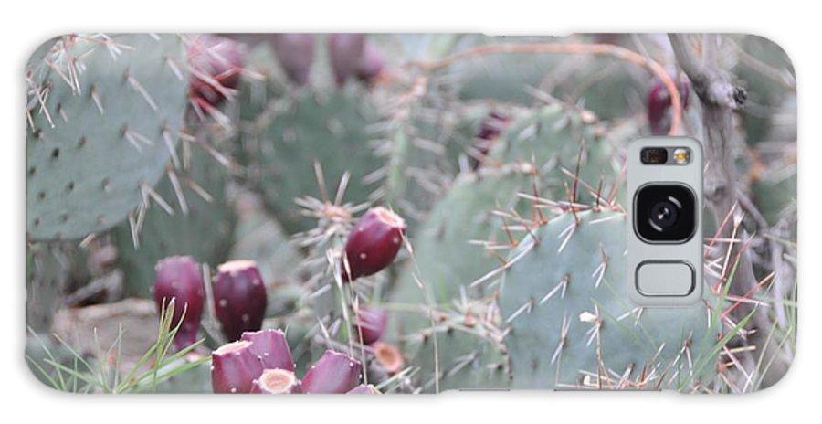 Flowers Galaxy S8 Case featuring the photograph Cactus Fruit by David Pennington Sr