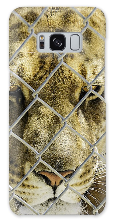 Liger Galaxy S8 Case featuring the photograph Caged Liger by LeeAnn McLaneGoetz McLaneGoetzStudioLLCcom