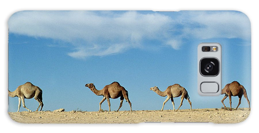 Camels; Animal; Desert; Arid Galaxy S8 Case featuring the photograph Camel Train by Anonymous