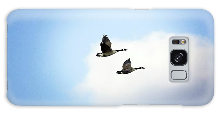 Branta Canadensis Galaxy S8 Case featuring the photograph Canada Geese In Flight by John Devries/science Photo Library