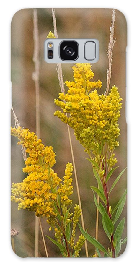 Canada Goldenrod Galaxy S8 Case featuring the photograph Canada Goldenrod by Erica Hanel