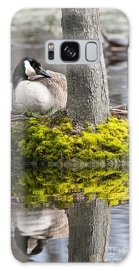 Photography Galaxy S8 Case featuring the photograph Canada Goose On Nest by Michael Cummings