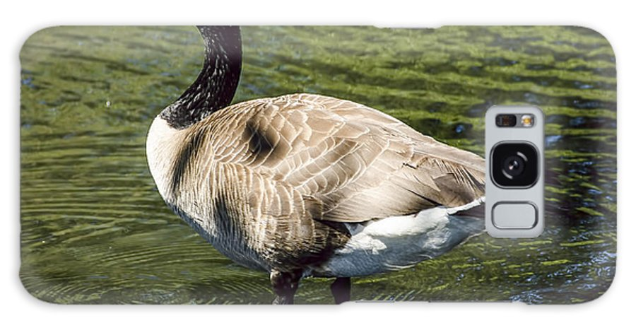 Goose Galaxy S8 Case featuring the photograph Canadian Goose by Irene Theriau