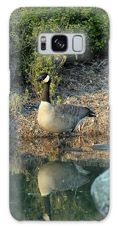Canadian Goose Reflection Galaxy S8 Case featuring the photograph Canadian Goose Reflection by Maria Urso