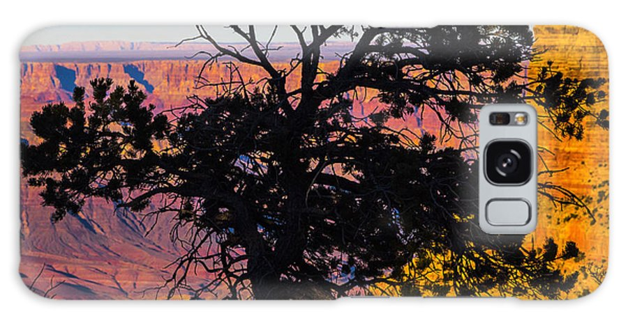 Grand Canyon Galaxy S8 Case featuring the photograph Canyon Tree by Angus Hooper Iii