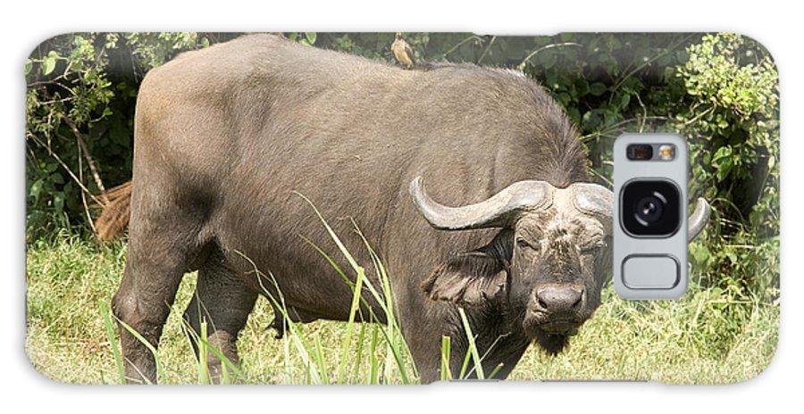 Murchison Falls Np Galaxy S8 Case featuring the photograph Cape Buffalo Uganda by Liz Leyden